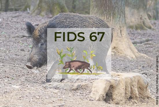 fids67-optimise-la-gestion-de-son-territoire-grace-au-sig-geoconcept